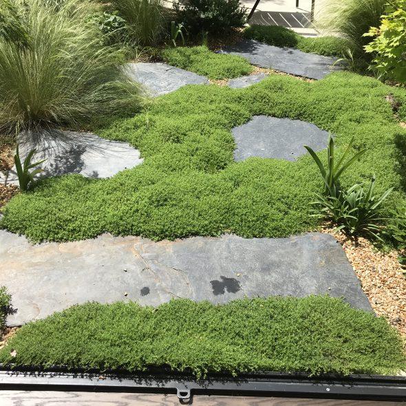 Aménagement jardin de ville, plantes, ardoises, arbres